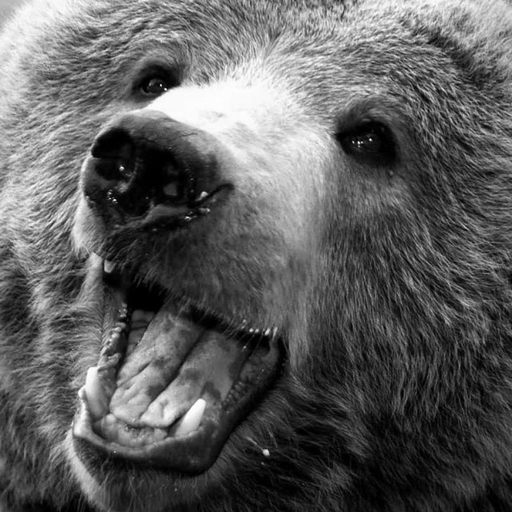 cool picture of a really happy bear